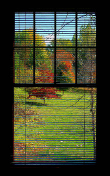 Window-autumn