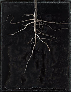 Revealed Root 2